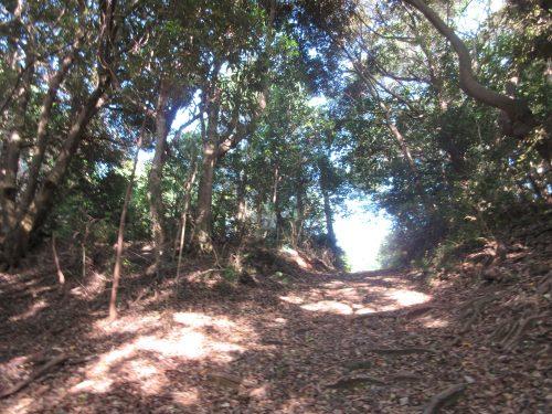 渡鹿野島山林